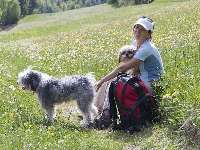 happy hiking with a dog in Slovenia