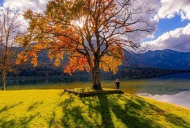 three-lakes-savica-bohinj-lake-tree